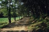 Sant Martí del Clot (camí d'accés)_Bianyal 2019
