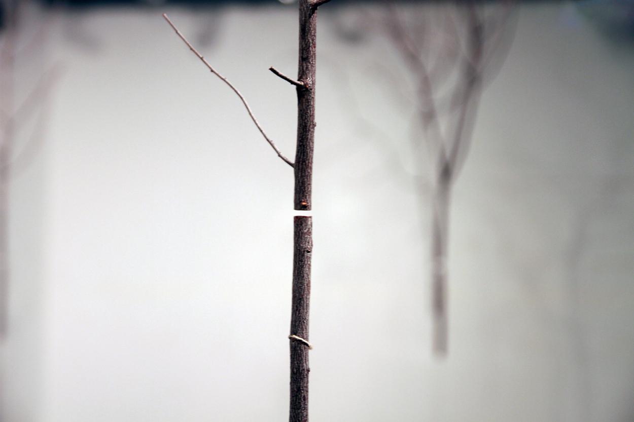 """""""Un instant en el bosc"""" Paula Bruna"""
